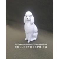 """Статуэтка собака """"Пудель"""" (сидящий). Фарфор ЛФЗ СССР."""